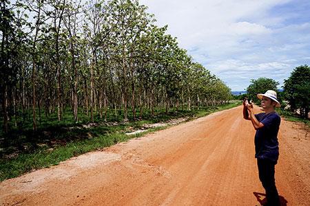 ขายโครงการสวนเกษตร(สักทอง) วังซ่าน แม่วงก์ นครสวรรค์ โทร 0818030546