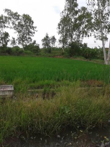 ขายที่ดินเขตคลองสามวา มีนบุรี ทำเลดีมาก เหมาะทำบ้านจัดสรร