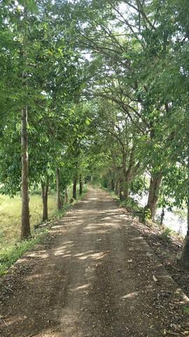ขายที่ดิน 4-3-91.7 ไร่ เหมาะสำหรับทำบ้านสวน  บ.ศิลา อ.เมือง จ.ขอนแก่น