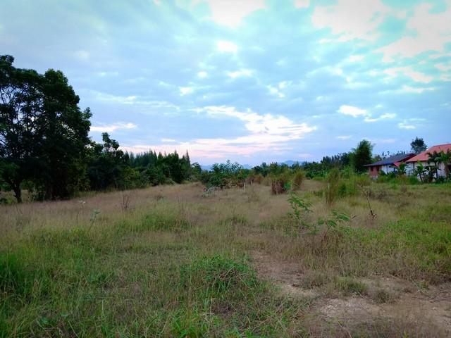 ขายที่ดินอำเภอแก่งคอย 10-2-52 ไร่ ติดถนน แก่งคอย - แสลงพัน เหมาะสร้างรีสอร์ท หมู่บ้านจัดสรร