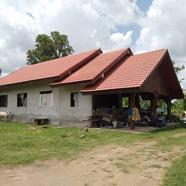 ขาย บ้านพร้อมที่ดิน 24ไร่ ติดถนนหมายเลข 24 โชคชัย-เดชอุดม สุรินทร์ (เยื้องเต่าสะเร็น)