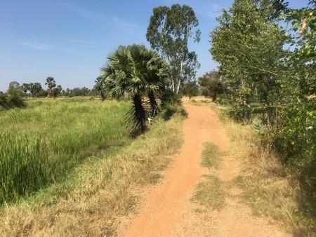ขายที่ดินแบ่งขาย อำเภอโนนไทย นครราชสีมาขนาด 20 ไร่ 30 ไร่ 50 ไร่