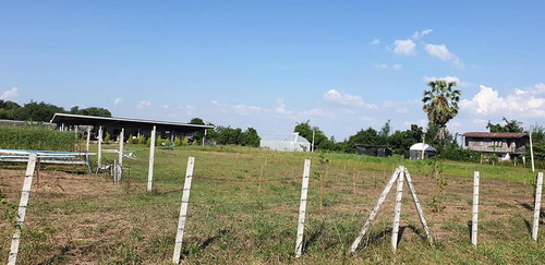 ที่ดินโฉนด 9ไร่พร้อมโรงเรือนฟาร์มผักสลัดทำธุรกกิจต่อเนื่องได้เลย