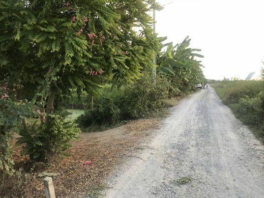 ขาย ที่ดิน สวน 3 ไร่  ติดถนน มีร่องสวนเรียบร้อย  อำเภอ บางเลน นครปฐม