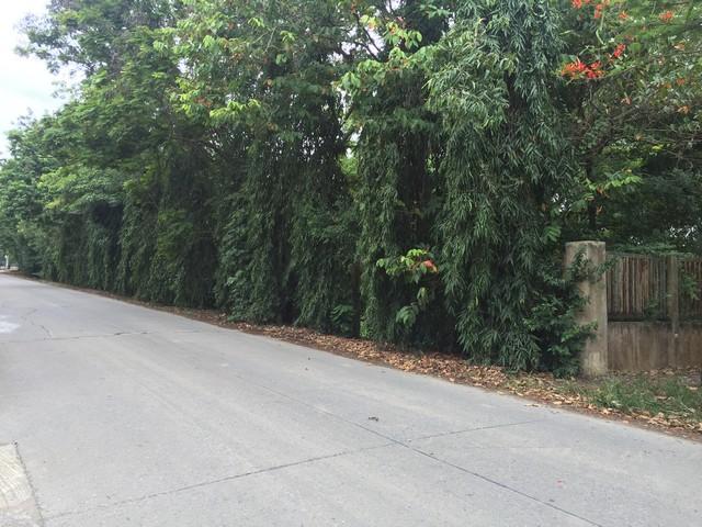ที่ดินแปลงงาม 1 ไร่ ริมถนนทางเข้าโรงเรียนวัดราษฏร์ศรัทาธรรม ปทุมธานี