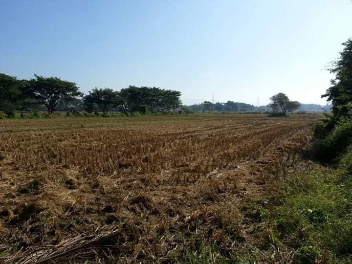 ขายที่ดิน 2 ไร่ 2 งาน 74 ตารางวา ต.ชมพู อ.เมือง จ.ลำปาง