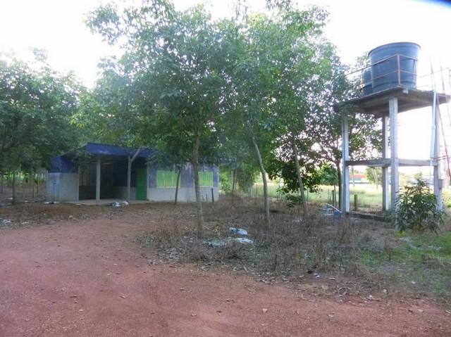 LS 432 ขายที่ดินและบ้าน พื้นที่75 ไร่ จังหวัดหนองคาย พร้อมกิจการสวน โรงเรือนเพราะหมูแม่พันธุ์