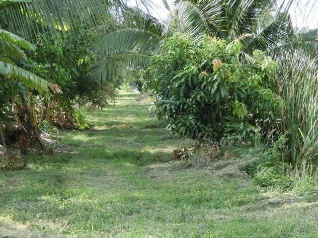 LS 437 ขายที่ดิน ขนาดพื้นที่ 25 ไร่ ที่สวนพร้อมสิ่งปลูกสร้าง ลำพญา นครปฐม